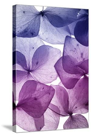 Colorful Flower Petal Closeup-maaram-Stretched Canvas Print