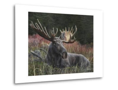 Recumbent Moose-Kevin Daniel-Metal Print