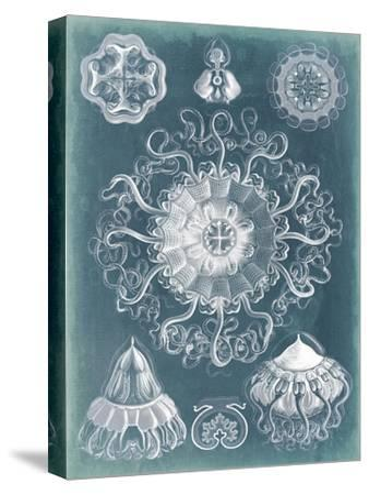 Sealife Blueprint II-Vision Studio-Stretched Canvas Print