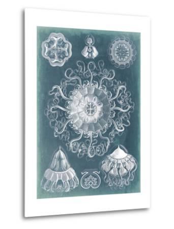 Sealife Blueprint II-Vision Studio-Metal Print