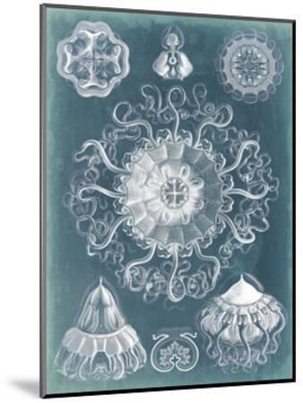 Sealife Blueprint II-Vision Studio-Mounted Art Print