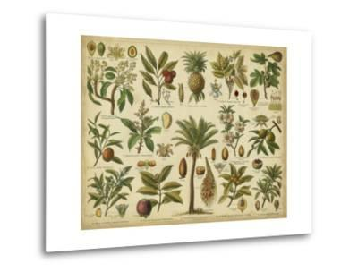 Classification of Tropical Plants-Vision Studio-Metal Print