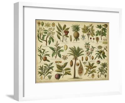 Classification of Tropical Plants-Vision Studio-Framed Art Print
