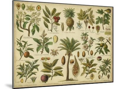 Classification of Tropical Plants-Vision Studio-Mounted Art Print