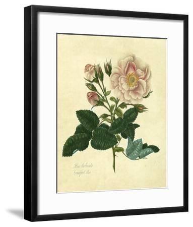 Frankfort Rose-Mary Lawrence-Framed Art Print
