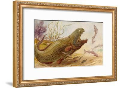 The Extinct Dinichthys Fish Could Grow Up to Twenty-Five Feet Long-Charles R. Knight-Framed Giclee Print