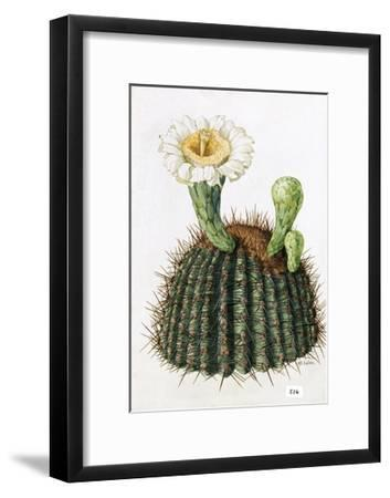 A Painting of a Saguaro Cactus and its Blossom-Mary E. Eaton-Framed Giclee Print