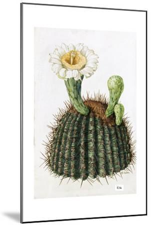A Painting of a Saguaro Cactus and its Blossom-Mary E. Eaton-Mounted Giclee Print