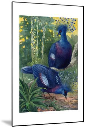 A View of the Flimsy Crests of Two Victoria Crowned Pigeons-Hashime Murayama-Mounted Giclee Print