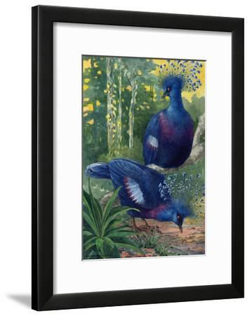 A View of the Flimsy Crests of Two Victoria Crowned Pigeons-Hashime Murayama-Framed Giclee Print