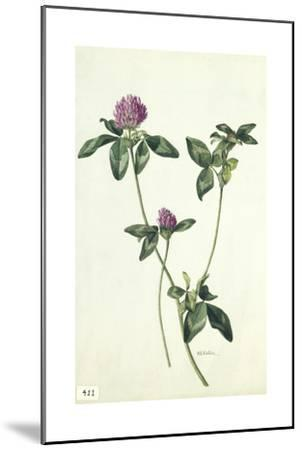 A Painting of a Sprig of Red Clover-Mary E. Eaton-Mounted Giclee Print