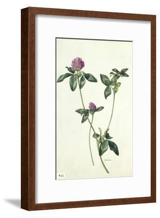A Painting of a Sprig of Red Clover-Mary E. Eaton-Framed Giclee Print
