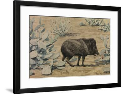 A Painting of a Collared Peccary, also known as a Muskhog, Eating-Louis Agassi Fuertes-Framed Giclee Print
