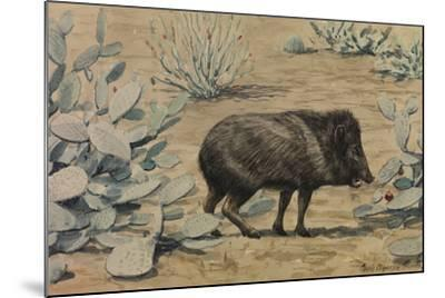 A Painting of a Collared Peccary, also known as a Muskhog, Eating-Louis Agassi Fuertes-Mounted Giclee Print