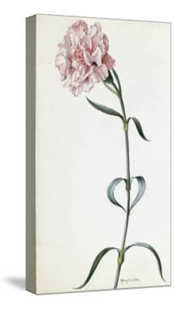 A Painting of a Sprig of Pink Carnation-Mary E. Eaton-Stretched Canvas Print