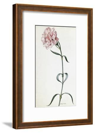 A Painting of a Sprig of Pink Carnation-Mary E. Eaton-Framed Giclee Print