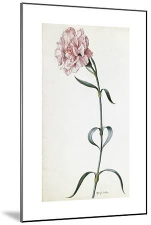 A Painting of a Sprig of Pink Carnation-Mary E. Eaton-Mounted Giclee Print