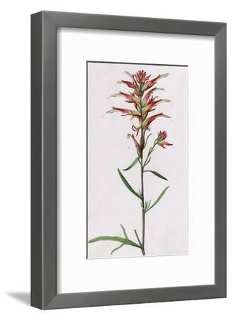 A Sprig of Wyoming Indian Paintbrush-Mary E. Eaton-Framed Giclee Print