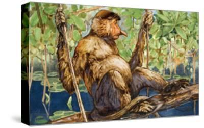 Painting of a Proboscis Monkey in a Borneo Rain Forest-Elie Cheverlange-Stretched Canvas Print