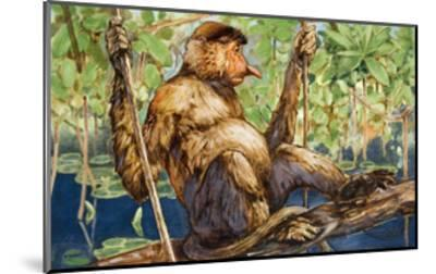 Painting of a Proboscis Monkey in a Borneo Rain Forest-Elie Cheverlange-Mounted Giclee Print
