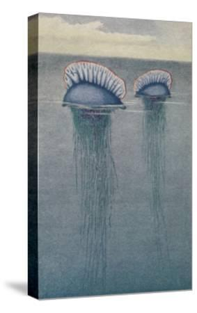 A Painting of Two Jellyfish known as the Portuguese Man-Of-War-Hashime Murayama-Stretched Canvas Print