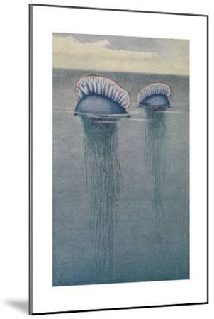 A Painting of Two Jellyfish known as the Portuguese Man-Of-War-Hashime Murayama-Mounted Giclee Print