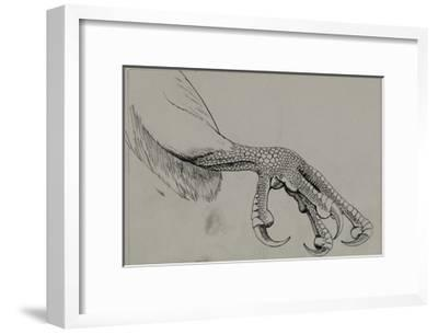 A Depiction of the Half-Closed Foot of a Falcon-Louis Agassi Fuertes-Framed Giclee Print