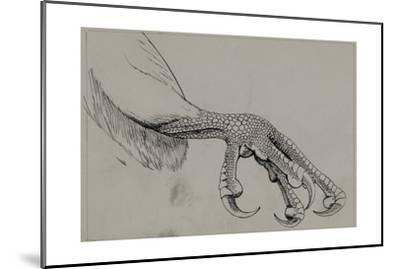 A Depiction of the Half-Closed Foot of a Falcon-Louis Agassi Fuertes-Mounted Giclee Print