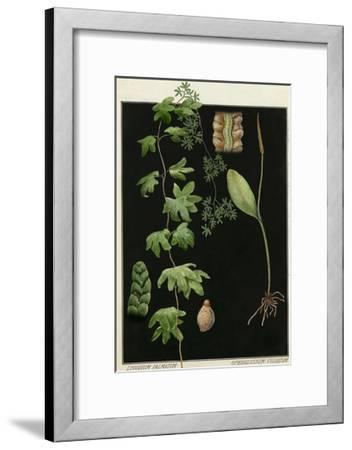 Painting of Southern Adderstongue and American Climbing Fern-E.J. Geske-Framed Giclee Print