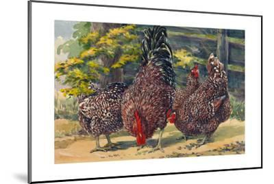 England's Speckled Sussex Pecks the Ground-Hashime Murayama-Mounted Giclee Print