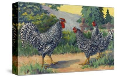 The Dominique Breed Was Named in a U.S. Poultry Show in 1849-Hashime Murayama-Stretched Canvas Print