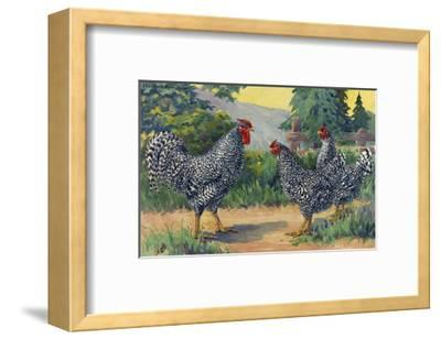 The Dominique Breed Was Named in a U.S. Poultry Show in 1849-Hashime Murayama-Framed Giclee Print