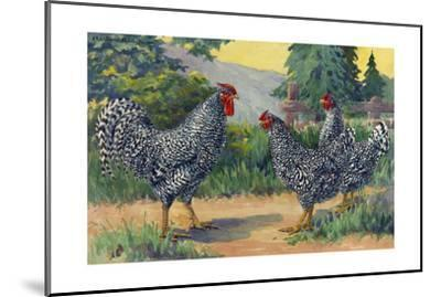 The Dominique Breed Was Named in a U.S. Poultry Show in 1849-Hashime Murayama-Mounted Giclee Print