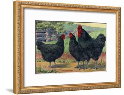 The Jersey Black Giants Lay Large Brown Eggs-Hashime Murayama-Framed Giclee Print