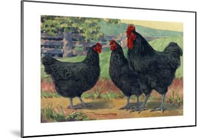 The Jersey Black Giants Lay Large Brown Eggs-Hashime Murayama-Mounted Giclee Print