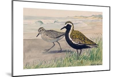 A Painting of Two Golden Plovers in Winter and Summer Plumage-Louis Agassi Fuertes-Mounted Giclee Print