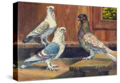 Three Varieties of Classic Oriental Fills, Originating from Turkey-Hashime Murayama-Stretched Canvas Print
