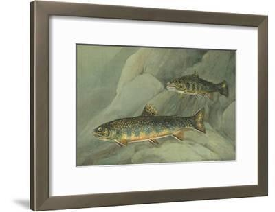 A Painting of a Pair of Brook Trout Swimming over Rocks-Hashime Murayama-Framed Giclee Print
