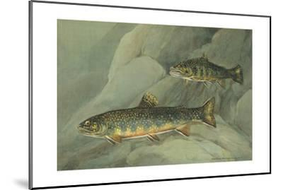A Painting of a Pair of Brook Trout Swimming over Rocks-Hashime Murayama-Mounted Giclee Print