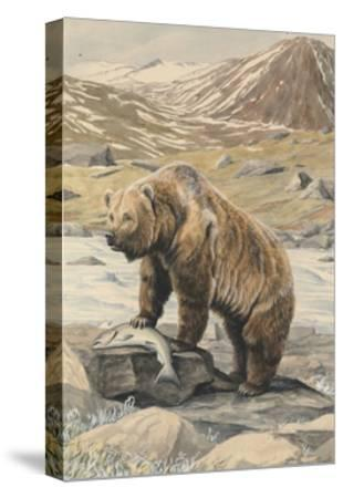 An Alaskan Brown Bear with a Salmon it Caught in a Nearby River-Louis Agassi Fuertes-Stretched Canvas Print