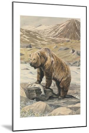 An Alaskan Brown Bear with a Salmon it Caught in a Nearby River-Louis Agassi Fuertes-Mounted Giclee Print