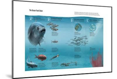 The Ocean Food Chain; Predators, Consumers and Producers-Hernan Canellas-Mounted Giclee Print