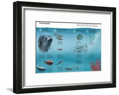 The Ocean Food Chain; Predators, Consumers and Producers-Hernan Canellas-Framed Giclee Print