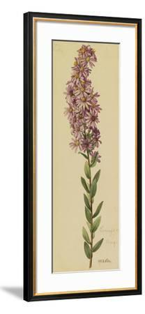 This Plant Is a Member of the Aster Family-Mary E. Eaton-Framed Giclee Print
