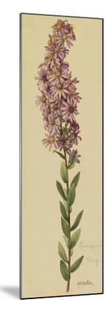 This Plant Is a Member of the Aster Family-Mary E. Eaton-Mounted Giclee Print