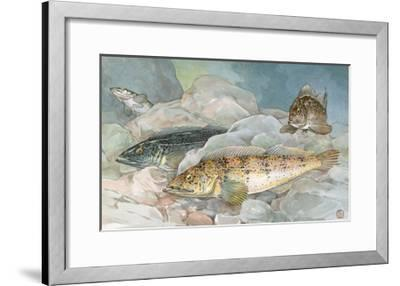 Ling Codfish Change Color to Fit its Surroundings-Hashime Murayama-Framed Giclee Print