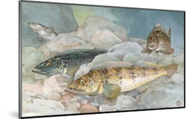 Ling Codfish Change Color to Fit its Surroundings-Hashime Murayama-Mounted Giclee Print