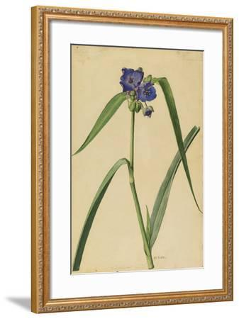 This Plant Is a Member of the Spiderwort Family-Mary E. Eaton-Framed Giclee Print