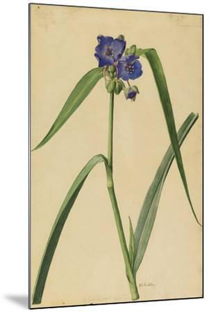 This Plant Is a Member of the Spiderwort Family-Mary E. Eaton-Mounted Giclee Print
