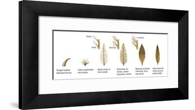 Evolution of the First Feathers-Xing Lida-Framed Giclee Print